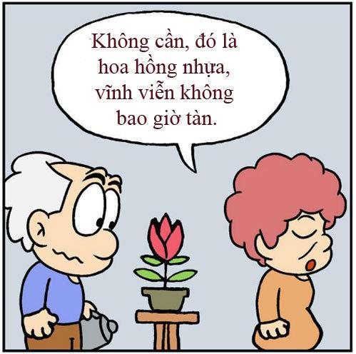 Lão già ngốc nghếch: Hoa hồng tình yêu