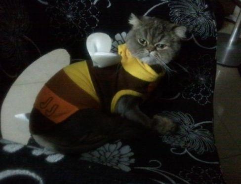 <p> Chú mèo cực xinh này tên là Yoyo và thuộc quyền sở hữu của Jae Joong.</p>