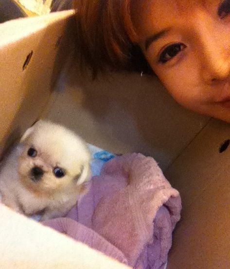 <p> Park Bom 2NE1 chụp ảnh cùng chú cún Yeo Reum. Ngoài ra cô còn nuôi thêm một bạn cún khác tên là Choco.</p>