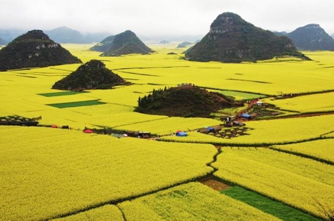 <p> 2. Cánh đồng hoa cải dầu trải dài đến tận chân trời ở huyện La Bình thuộc tỉnh Vân Nam, Trung Quốc. Độ cuối tháng 2 đầu tháng 3 khi tiết trời vào giữa xuân, 300.000 mẫu trồng hoa cải ở huyện La Bình ngập trong sắc vàng rực rỡ.</p>