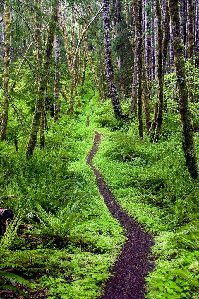 <p> Con đường mòn giữa rừng cây ở thung lũng Sol Duc, Olympic Wilderness, Washington. Ảnh: P<em>ablo McLoud</em></p>