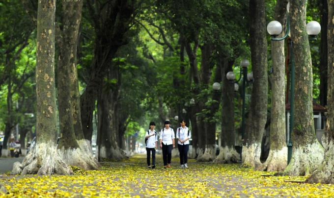 """<p class=""""Normal""""> Đây là con đường có vỉa hè rộng nhất nhì Hà Nội với những cây sấu cổ thụ. Điều đặc biệt là có một đoạn phố có hai hàng cây trên cùng một vỉa hè. Mùa lá sấu rụng đem lại nhiều ký ức đẹp về một thời cắp sách đến trường.</p>"""