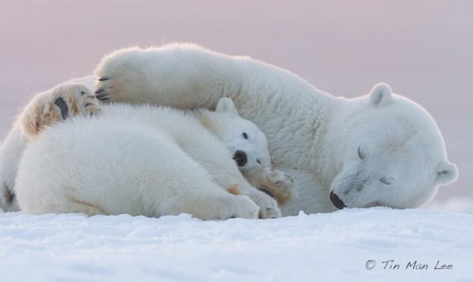 Sưởi ấm trái tim với những cái ôm ngọt ngào của động vật