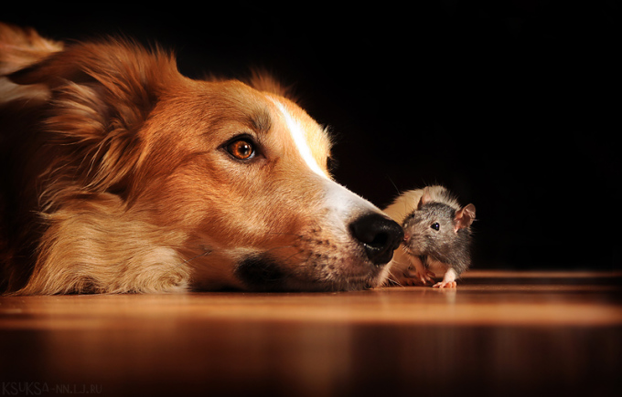 <p> Ksenia Raykova có sở thích chụp ảnh cho cún từ năm 14 tuổi. Cún cưng Kim chính là nguồn cảm hứng bất tận của cô nữ sinh kiến trúc.</p>