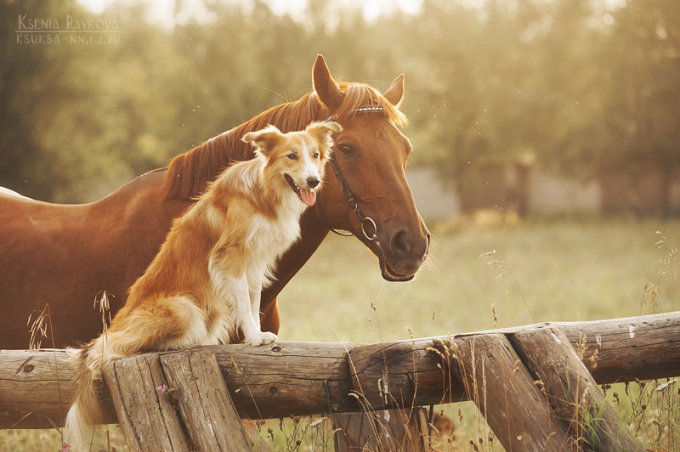 Chú chó hồn nhiên tạo dáng cực yêu