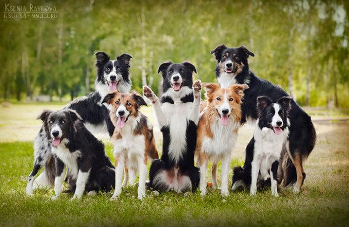 <p> Những bức ảnh đẹp của Ksenia được nhiều người biết đến khi chia sẻ trên mạng. Cô bạn cũng nhận được nhiều lời mời chụp ảnh cho những chú chó khác.</p>