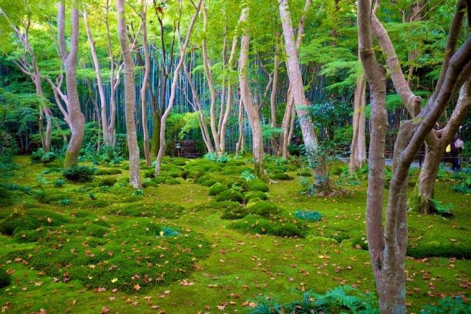 <p> Đền Giō-ji ở Kyoto như chốn thế ngoại đào nguyên với khu vườn yên tĩnh trải thảm rêu xanh rì.</p>