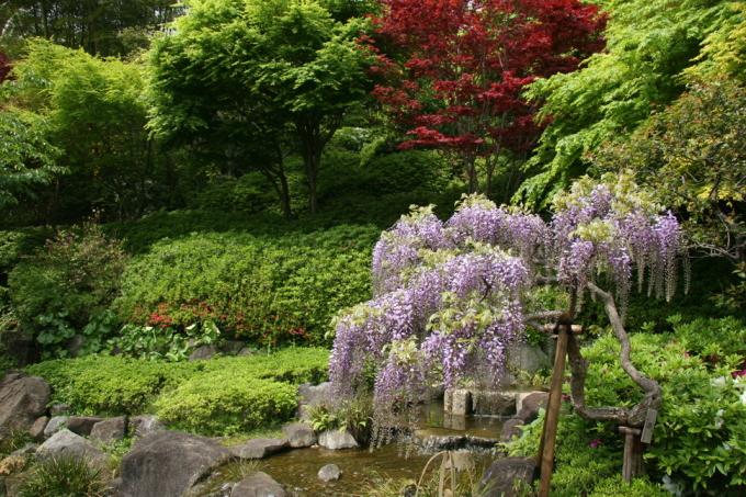 """<p class=""""Normal""""> Hase-dera là một trong những ngôi đền và vườn lâu đời nhất ở Kamakura, Kanagawa, được xây dựng từ khoảng năm 736.</p>"""