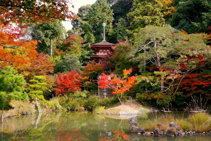 <p> Đền Jōruri-ji ở Kyoto được bao quanh bởi những vườn cây, hồ nước xinh đẹp.</p>