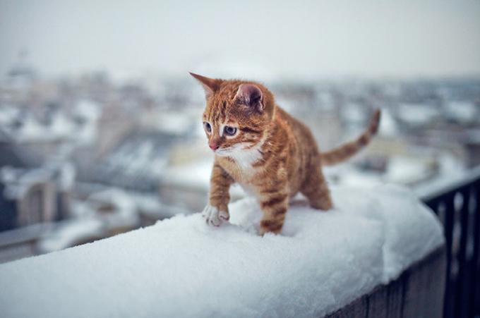 Thú cưng siêu yêu đón mùa tuyết đầu tiên trong đời