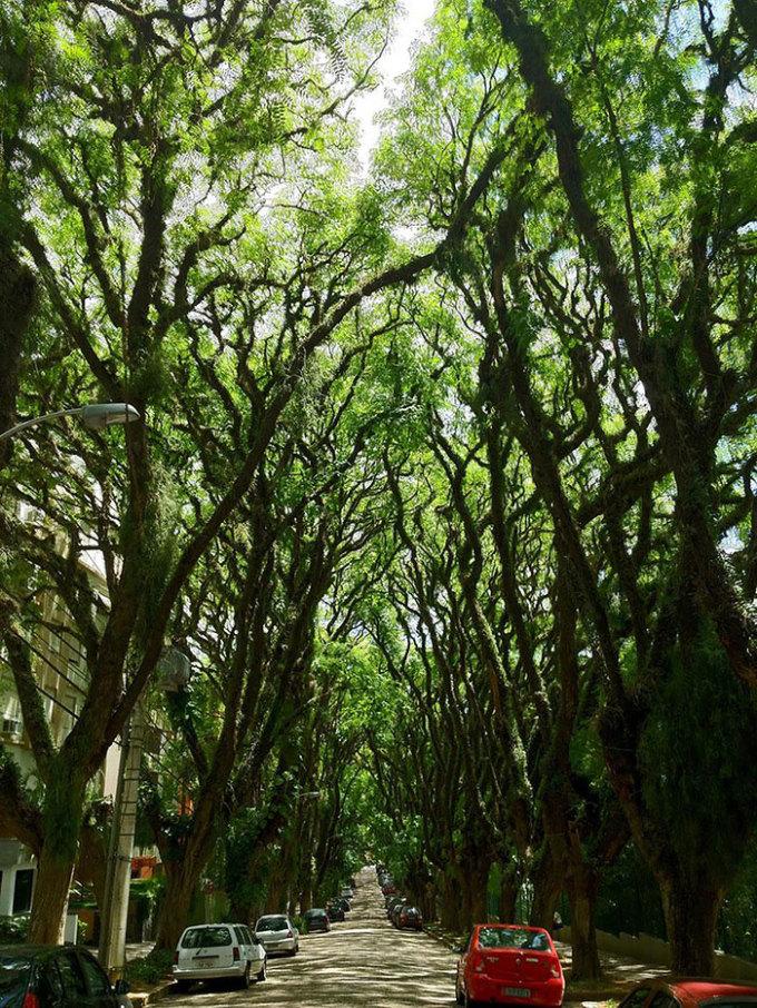 <p> Đường cây cao vút, xanh rì như khu rừng nhỏ giữa lòng thành phố Porto Alegre, Brazil.</p>