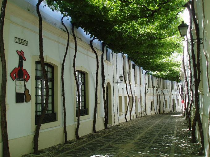 <p> Hàng cây bên đường ở Jerez (Tây Ban Nha) được thiết kế độc đáo và đầy nghệ thuật.</p>