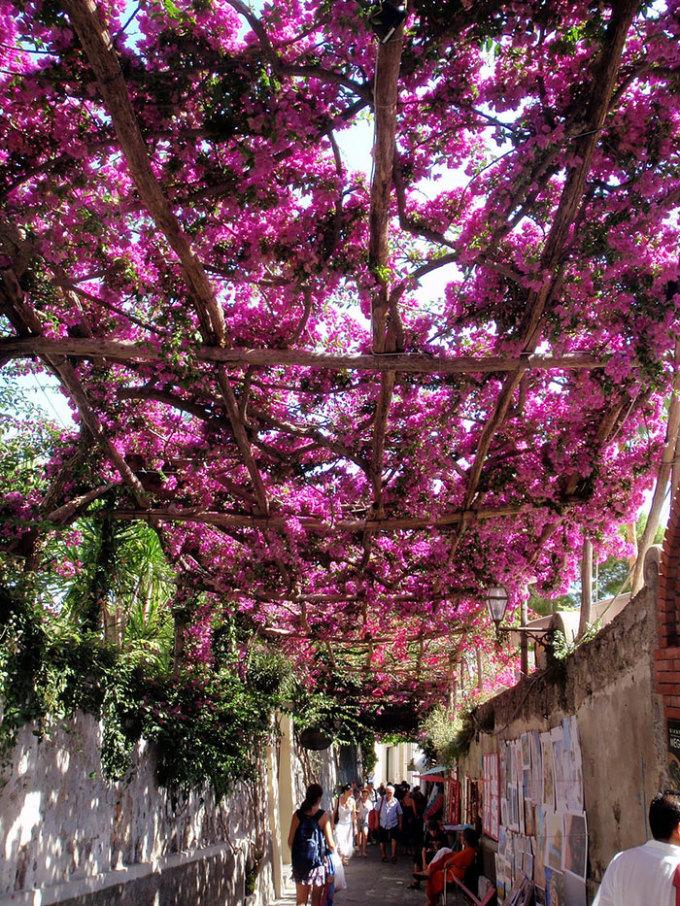 """<p class=""""Normal""""> Đi dạo dưới giàn hoa giấy nên thơ ở Positano, Salerno, Ý.</p>"""