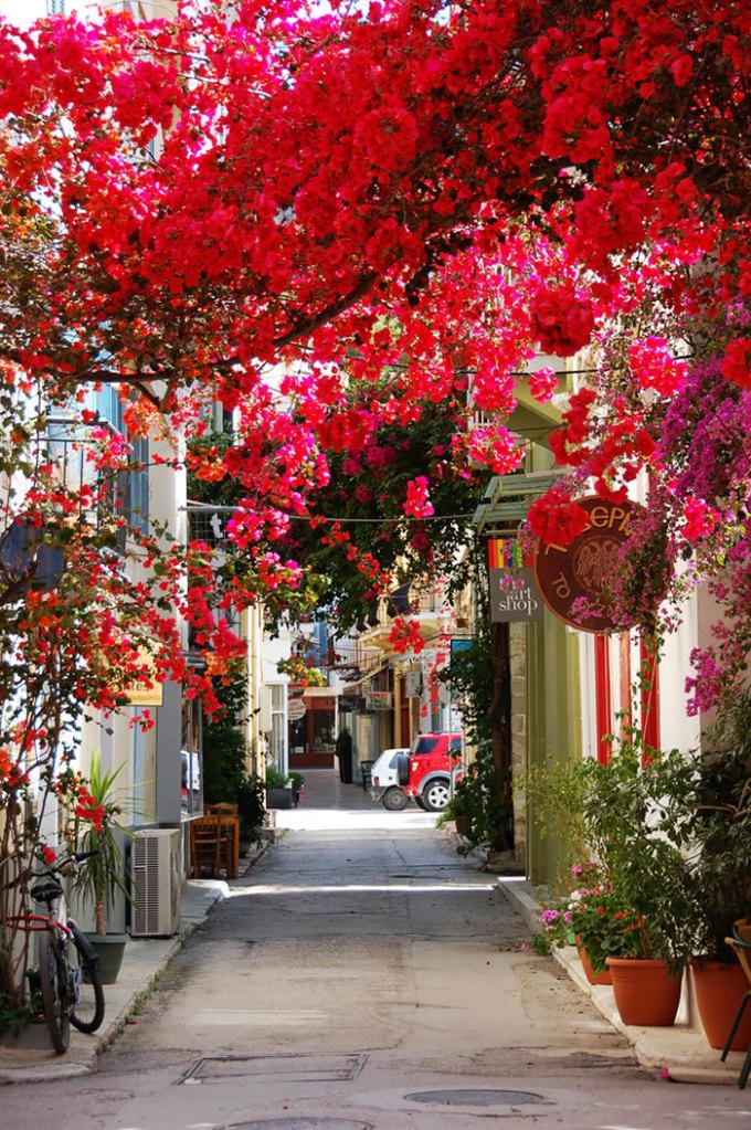 <p> Những giàn hoa giấy đỏ rực được trồng khắp thị trấn ven biển Nafplio (Peloponnese, Hy Lạp) tạo nên một khung cảnh tuyệt đẹp.</p>