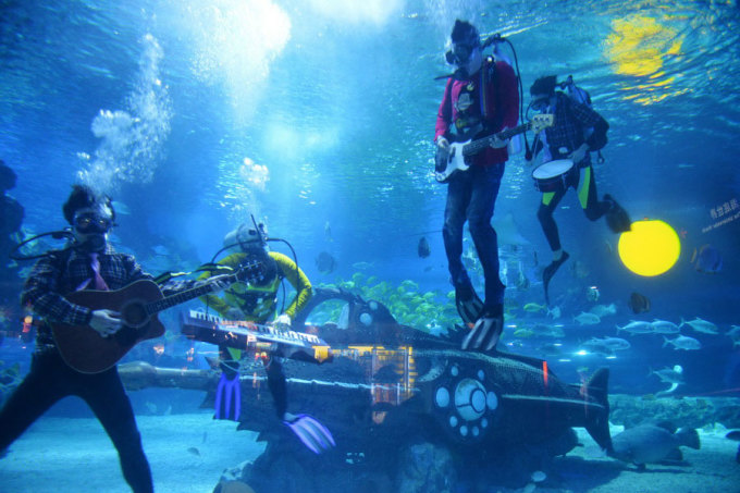 """<p class=""""Normal""""> Lễ hội âm nhạc dưới biển diễn ra dưới Khu bảo tồn biển quốc gia Florida Keys - quần đảo nằm ở đông nam nước Mỹ. Nhạc cụ là giả và âm thanh được truyền xuống đáy biển qua hệ thống loa đặc biệt. Tuy nhiên, những người tham gia vẫn say sưa biểu diễn và du khách vẫn thích thú thưởng thức.</p>"""