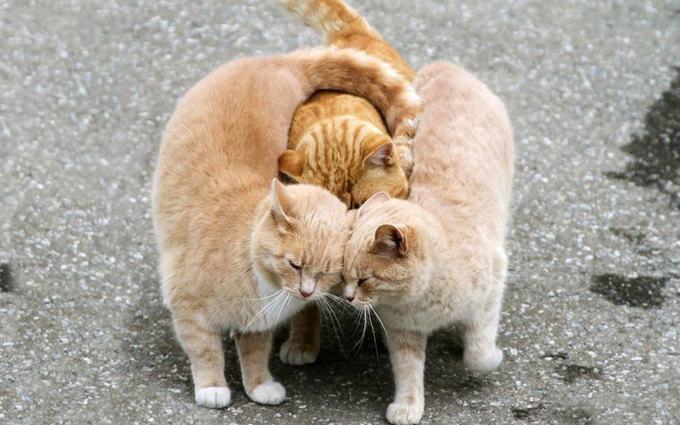 Tan chảy trước cách thể hiện tình yêu siêu dễ thương của thú cưng