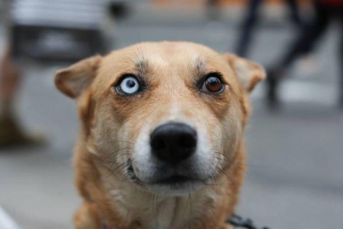 Những bé thú cưng có màu mắt khác biệt đẹp hút hồn