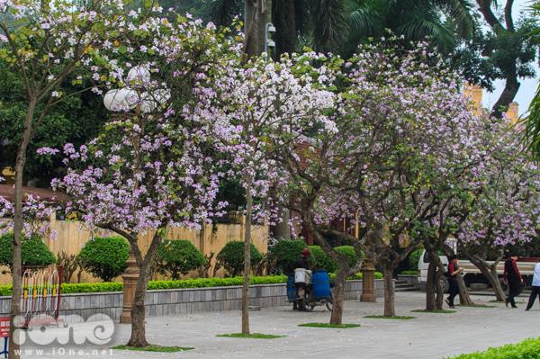 <p> Những cây hoa ban đẹp nhất nằm trên đường Bắc Sơn, gần Lăng Bắc. Đây là con đường thu hút nhiều bạn trẻ tới nhất mỗi độ tháng 3 về. Nhưng từ năm nay, con đường đã được quây lại phục vụ cho công tác cải tạo, điều này khiến không ít teen cảm thấy hụt hẫng.</p>