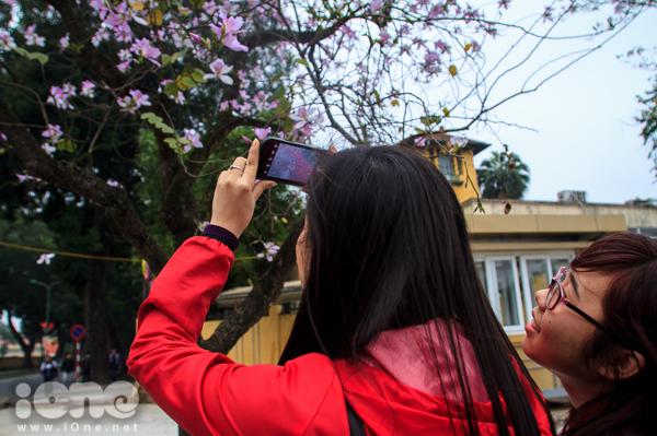 <p> Thời gian này, đi dọc các tuyến đường Thanh Niên, Hoàng Diệu - Bắc Sơn, Hàng Khay là các teen có thể được ngắm nhìn hoa ban thỏa thích.</p>