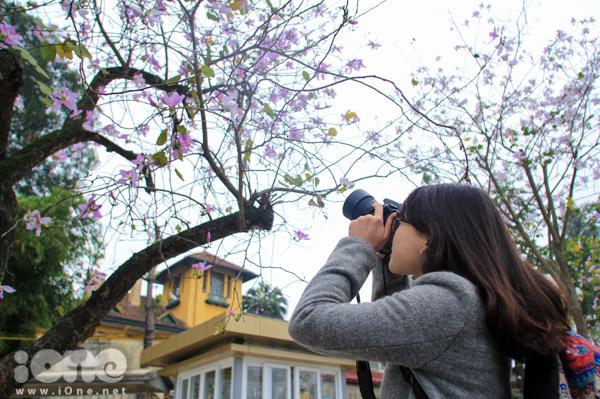 <p> Cô bạn hào hứng lưu lại hình ảnh hoa ban tím mơ mộng.</p>