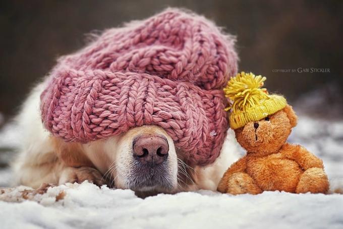 """<p class=""""Normal""""> Gabi Stickler, """"mẹ"""" của chú chó Mali, là một nhiếp ảnh gia nghiệp dư người Đức. Cô thích chụp ảnh chó Mali và bạn gấu Teddy chơi cùng nhau, đưa đôi bạn đến những cuộc phiêu lưu khám phá thiên nhiên.</p>"""