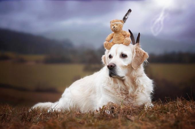 Bộ ảnh tuyệt đẹp về chú chó mặt buồn thích chơi cùng bạn gấu bông