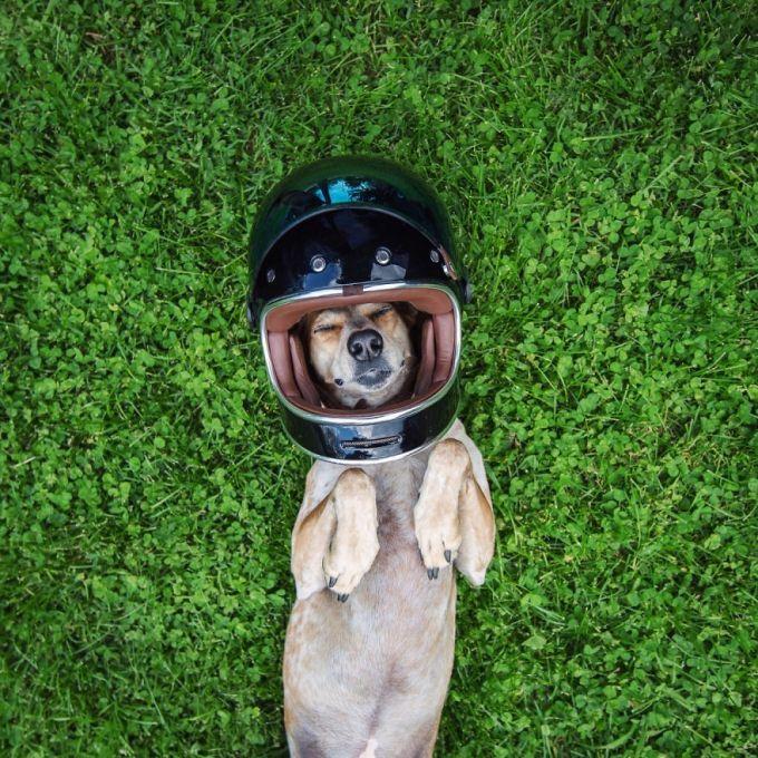 Bộ ảnh lung linh của chú chó nhỏ trên các cung đường phượt nước Mỹ