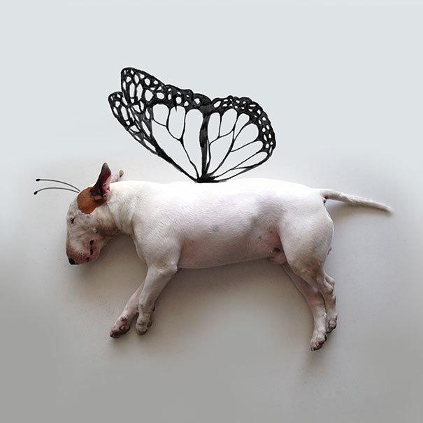 <p> Chú chó Jimmy được vẽ thêm cánh bướm cực xinh.</p>