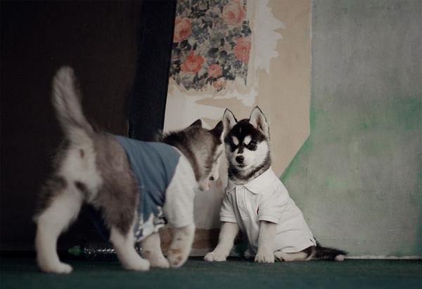 Thời trang cực yêu của các em cún