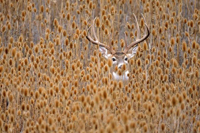 Khoảnh khắc các loài động vật nô đùa dưới trời thu