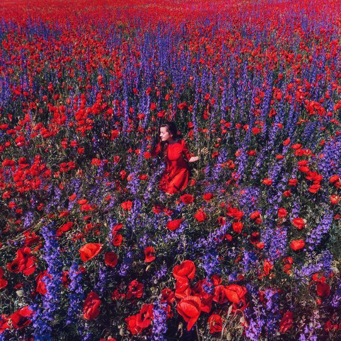 <p> Hoa Poppy và Phi yến thảo, Crimea.</p>