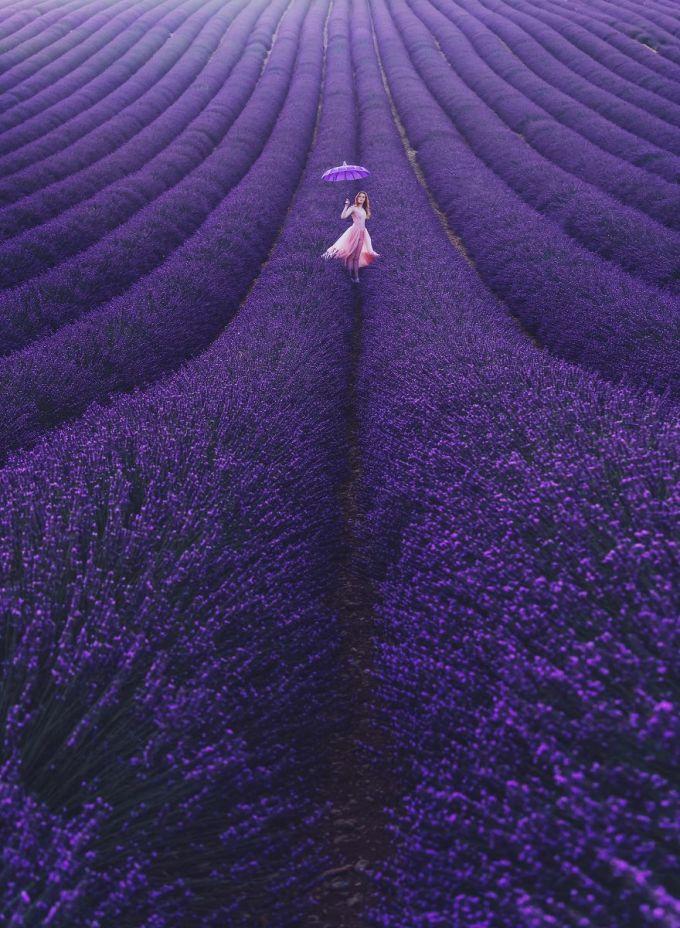 <p> Cánh đồng hoa oải hương ở Valensole, Provence, Pháp.</p>