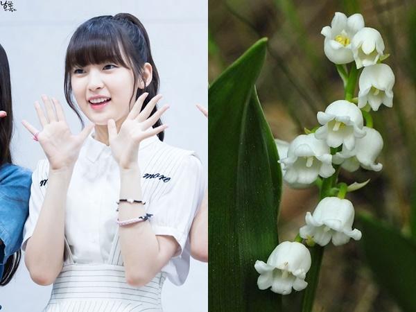 14-idol-kpop-co-ngoai-hinh-khi-chat-het-cac-loai-hoa-ruc-ro-2