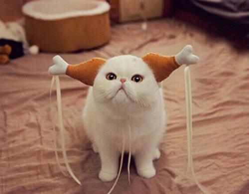 Cô Long phiên bản mèo.