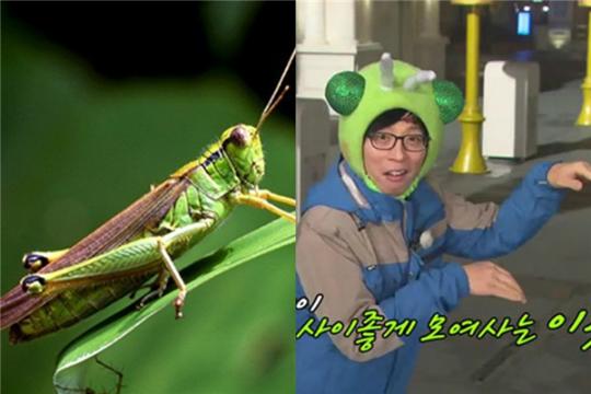 Yoo Jae Suk là yêu quái châu chấu.