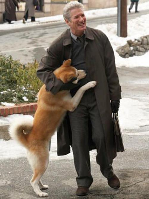 Ngày đầu năm, xem cảnh phim về chú chó trung thành khiến khán giả bật khóc - 1