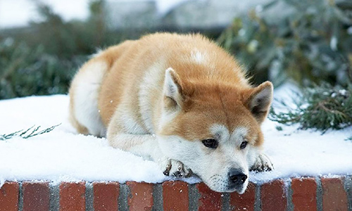 Ngày đầu năm, xem cảnh phim về chú chó trung thành khiến khán giả bật khóc