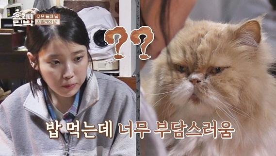 Mèo mặt khó ở là nhân vật quyền lực tại ngôi nhà Hyoris Homestay - 1