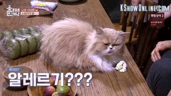 Chú mèo mặt khó ở là nhân vật quyền lực tại ngôi nhà Hyoris Homestay - 3