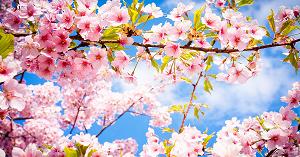 Trắc nghiệm: Loài hoa ưa thích tương ứng với phẩm chất nào của bạn? - 1