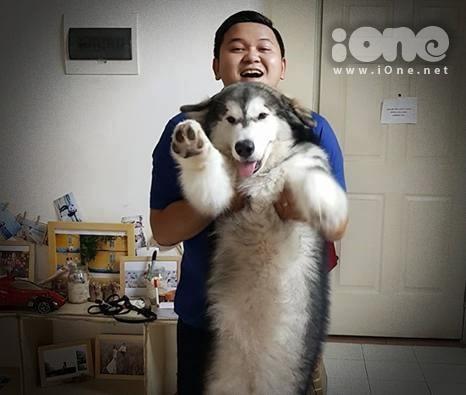 Danny Nguyễn chụp ảnh cùng chú chó cưng trước đó. Ảnh: NVCC.
