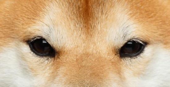 Đố bạn xếp chuẩn khuôn mặt cho chú cún siêu xinh này