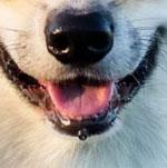 Đố bạn xếp chuẩn khuôn mặt cho chú cún siêu xinh này - 6