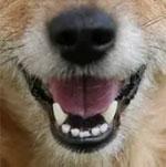Đố bạn xếp chuẩn khuôn mặt cho chú cún siêu xinh này - 13
