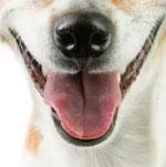 Đố bạn xếp chuẩn khuôn mặt cho chú cún siêu xinh này - 18