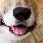 Đố bạn xếp chuẩn khuôn mặt cho chú cún siêu xinh này - 21