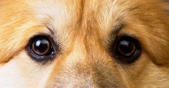 Đố bạn xếp chuẩn khuôn mặt cho chú cún siêu xinh này - 20
