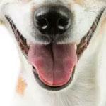 Đố bạn xếp chuẩn khuôn mặt cho chú cún siêu xinh này - 22
