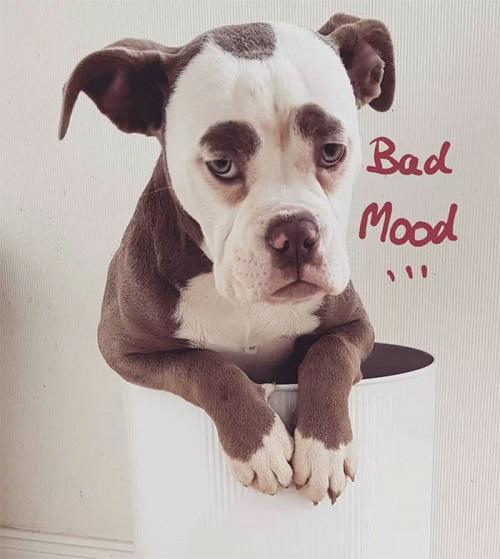 Nàng chó có gương mặt sầu đời nhất mạng xã hội - page 2 - 3