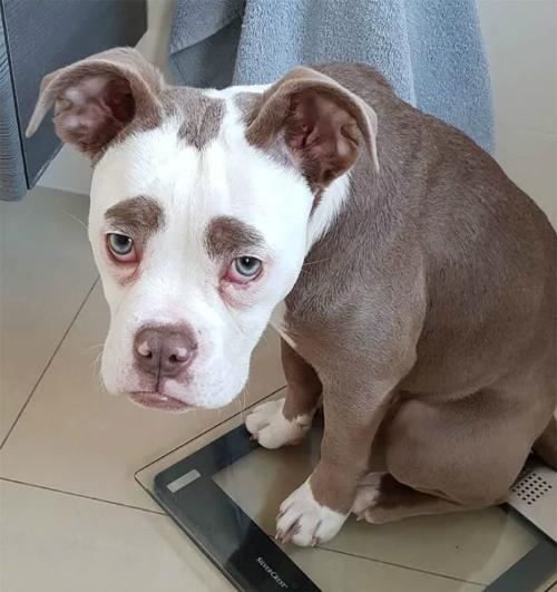 Nàng chó có gương mặt sầu đời nhất mạng xã hội